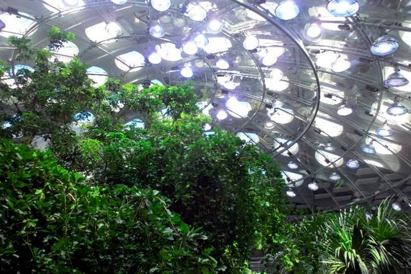 Looking up at the California Academy of Sciences Biosphere.