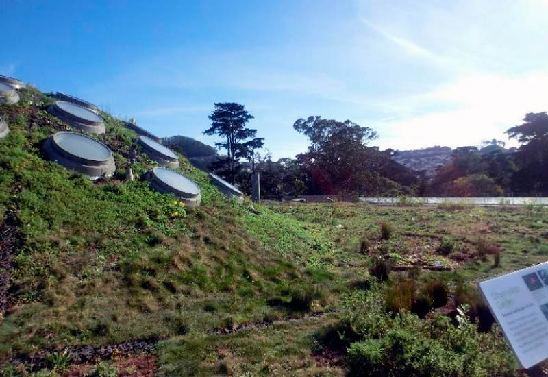 California Academy of Sciences Living Roof.